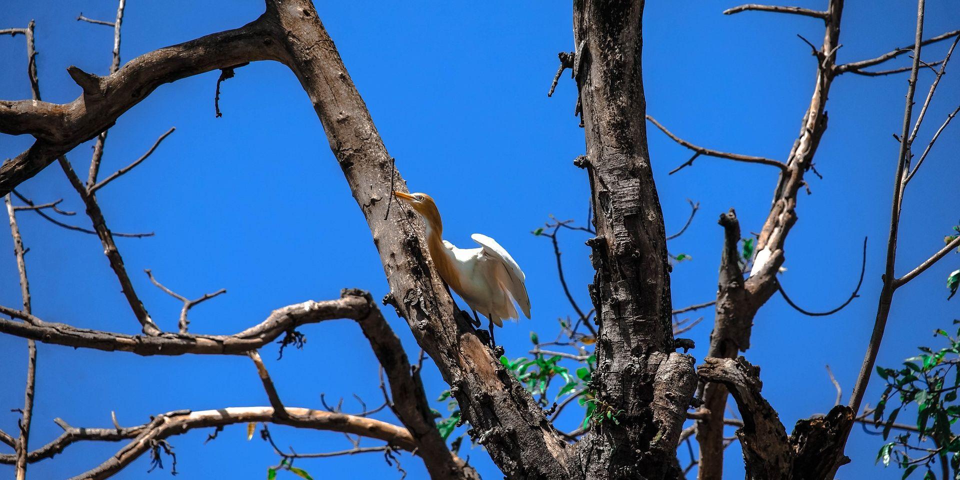 Birdlife Chitwan